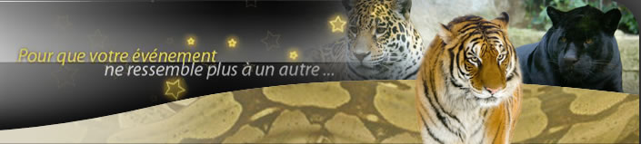 td_animaux-publicite loup animal
